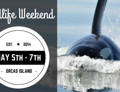 Orcas Island Wildlife Weekend