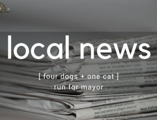 Four Dogs and a Cat:  Honorary Mayoral Candidates Announced